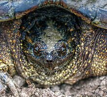 Snapping Turtle II by EelhsaM