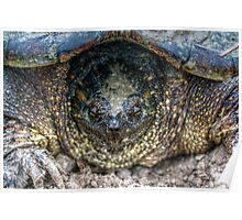 Snapping Turtle II Poster