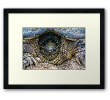 Snapping Turtle III Framed Print