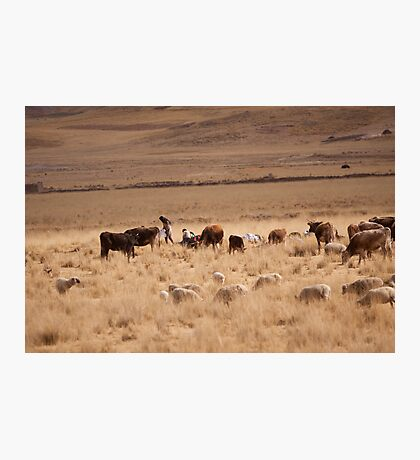 Farmer Altiplano Photographic Print
