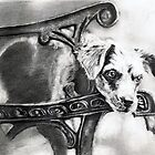 cute dog by danijelg
