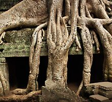 Cambodia - Angkor - Ta Prohm  #05 by Malcolm Heberle