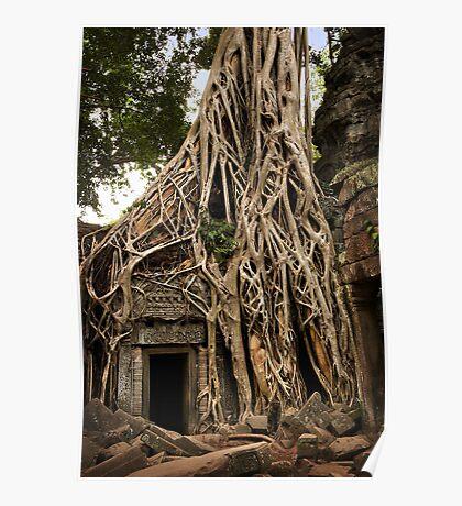Cambodia - Angkor - Ta Prohm  #06 ... location for film Tomb Raider Poster