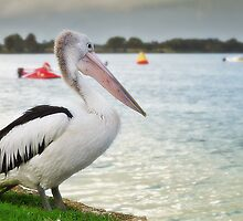 Pelican Day out 01 by kevin chippindall