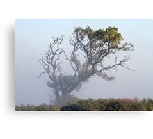 Touched by morning light - Barrabool Hills Canvas Print