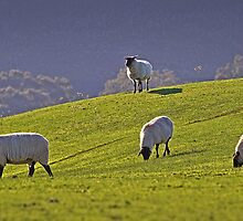 Green pasture 2 - Barrabool Hills by Hans Kawitzki