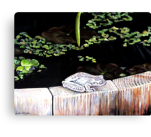 CHILLIN' AT THE LILY POND Canvas Print