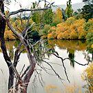 Derwent River 2013 by pennyswork