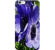 Two Blue Mauve Anemone - Close Up Windflowers iPhone Case/Skin