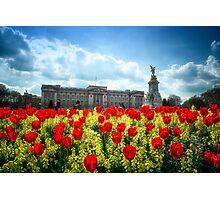 Buckingham Palace and tulips Photographic Print