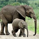 SIDE BY SIDE - THE AFRICAN ELEPHANT – Loxodonta Africana - Afrika Olifant by Magaret Meintjes