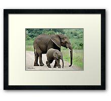 SIDE BY SIDE - THE AFRICAN ELEPHANT – Loxodonta Africana - Afrika Olifant Framed Print