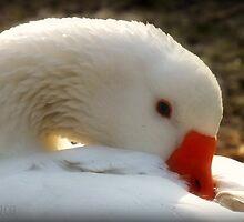 Pretty Goose by Cherry Franklin