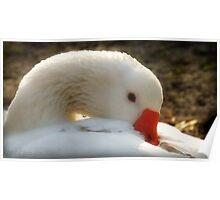 Pretty Goose Poster