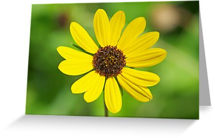 FLOWER CARD by TJ Baccari Photography