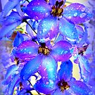 Delphinium by ©The Creative  Minds