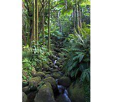 Hawaiian Stream Photographic Print