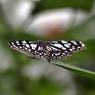 London Zoo: Butterfly by JLaverty