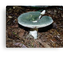 Mushroom ~ Green & White  Canvas Print