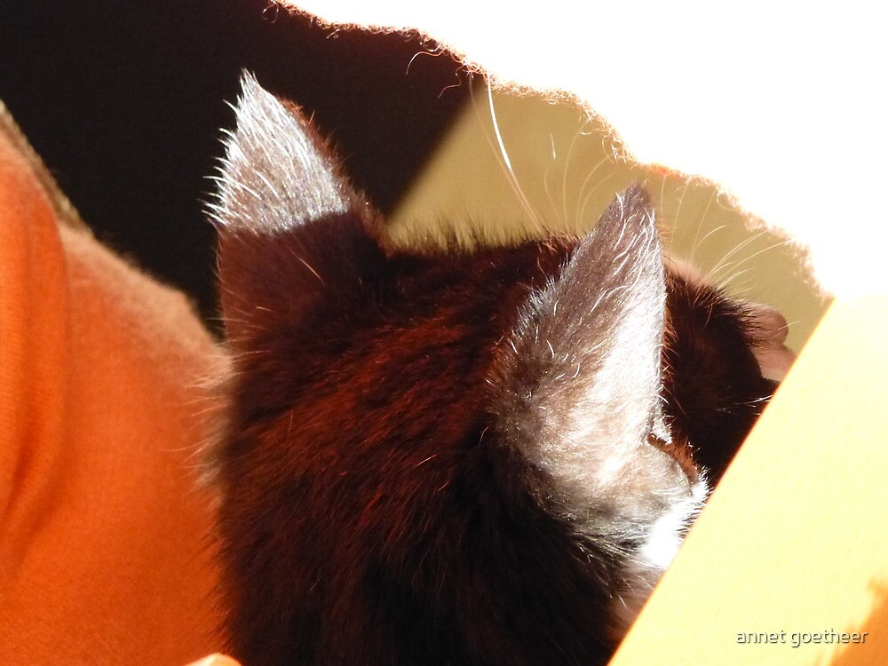 abstract cat by annet goetheer