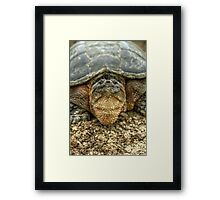 Snapping Turtle IX Framed Print