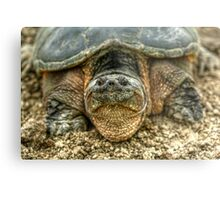 Snapping Turtle VI Metal Print