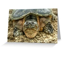 Snapping Turtle VI Greeting Card