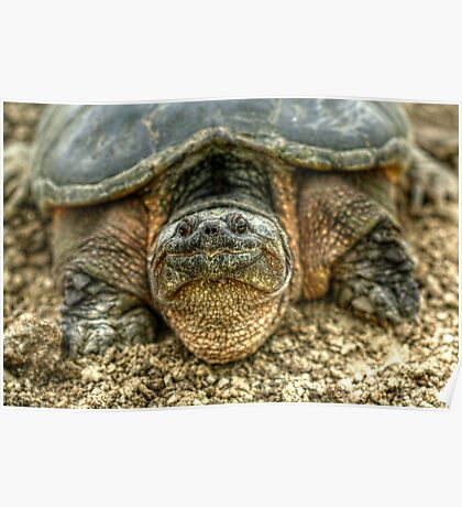 Snapping Turtle VI Poster