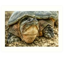 Snapping Turtle VII Art Print