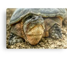 Snapping Turtle VII Metal Print