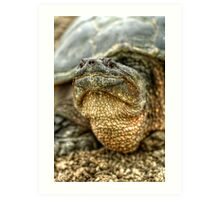 Snapping Turtle X Art Print