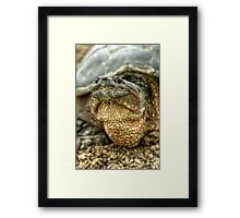 Snapping Turtle X Framed Print