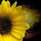 Texas Common Sunflower by Penny Odom