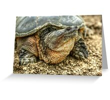 Snapping Turtle VIII Greeting Card