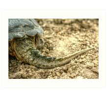 Snapping Turtle XII Art Print