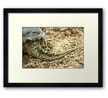 Snapping Turtle XII Framed Print