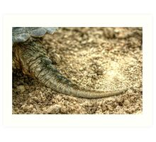 Snapping Turtle XIII Art Print
