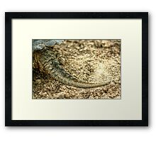 Snapping Turtle XIII Framed Print