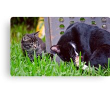 Kitten Playing With Its Mama Canvas Print