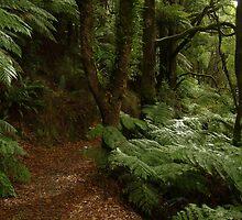Joe Mortelliti Gallery - Ferns on the walk track to Stephenson's Falls, Otways Forest, Victoria, Australia. by thisisaustralia