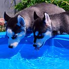 Keeping Cool At The Pool by jodi payne