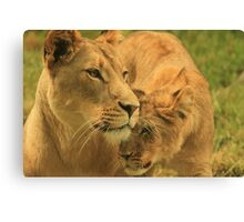 Nuzzles with my Mom Canvas Print