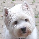 What a Westie wants by MarianBendeth