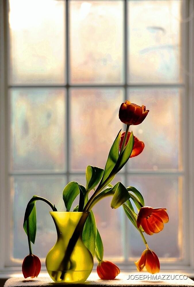 Tulips in Window Light.. by JOSEPHMAZZUCCO