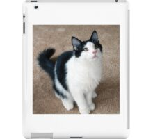 Fluffy Black and White Cat iPad Case/Skin