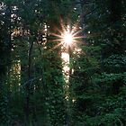 Sunrise through the forest by Kathleen Hamilton