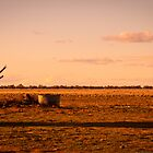 wasting away on the plains by outbacksnaps