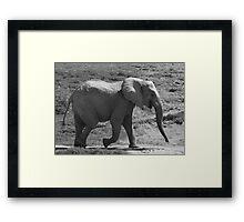 Laughing Elephant in Black & White  Framed Print
