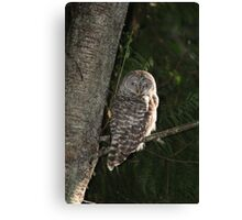 Barred Owl Forest Hike Canvas Print