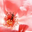 red rose with insect- rosa con insecto by dedakota